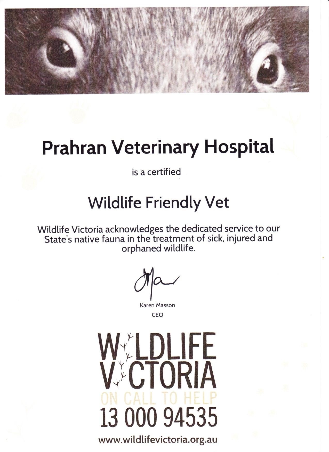 Wildlife Friendly Prahran Toorak Veterinary Hospital
