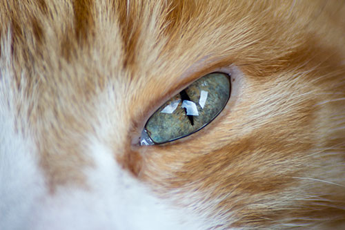 My Cat's Eye