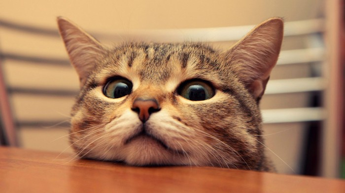 Meow, meow… Is your cat hungrier than normal?