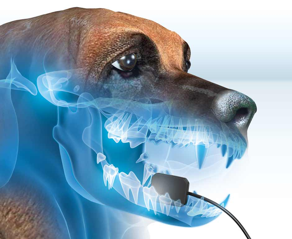 ScanX-DR-Dog-Xray-Dental